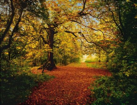 Autumn forest scene wall mural wallpaper